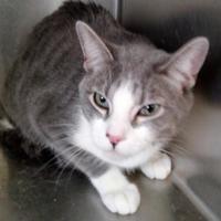 Adopt A Pet :: Chili - Rio Rancho, NM