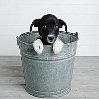 Adopt A Pet :: Jamaica - Denver, CO