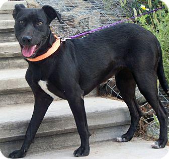 Labrador Retriever Mix Dog for adoption in El Cajon, California - SOCO