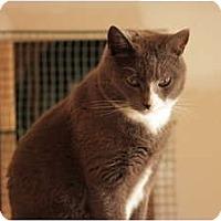 Adopt A Pet :: Greyson - Jenkintown, PA