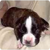 Adopt A Pet :: Holly - North Haven, CT