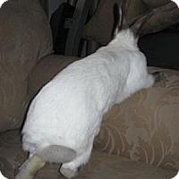 Adopt A Pet :: Tamara - Maple Shade, NJ