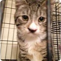 Adopt A Pet :: Winnie - Wenatchee, WA