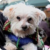 Adopt A Pet :: Matt - North Wales, PA