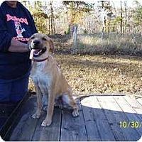 Adopt A Pet :: Whiskey - Glastonbury, CT