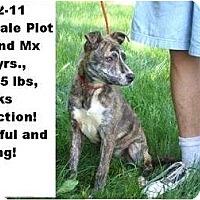 Adopt A Pet :: # 282-11 @ANIMAL SHELTER - Zanesville, OH