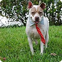 Adopt A Pet :: Abel - Lake Worth, FL