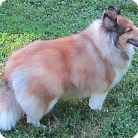 Adopt A Pet :: Penelope - Charlottesville, VA