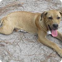 Adopt A Pet :: Cody - Marlton, NJ