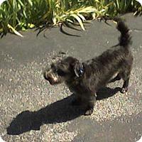 Adopt A Pet :: Bentley - Super Cutie - Rochester, NY