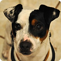 Adopt A Pet :: Billy~ADOPTED! - Troy, OH