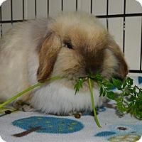 Adopt A Pet :: Lancelot - Waynesboro, VA