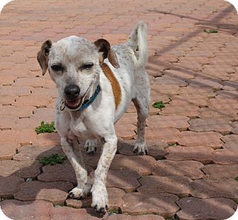 Terrier (Unknown Type, Medium) Mix Dog for adoption in Gettysburg, Pennsylvania - Peanut