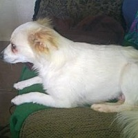 Adopt A Pet :: Kida - Odessa, TX