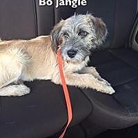 Adopt A Pet :: BO JANGLE - Lindale, TX