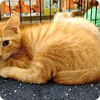 Adopt A Pet :: Paprika - Trenton, NJ