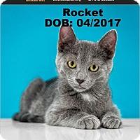 Adopt A Pet :: Rocket - Chandler, AZ