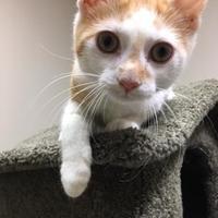 Adopt A Pet :: Edie - Chambersburg, PA
