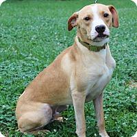Adopt A Pet :: Sav - Waldorf, MD