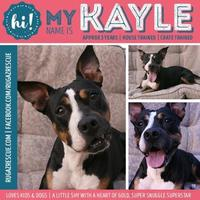 Adopt A Pet :: Kayle - New Port Richey, FL
