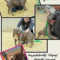 Adopt A Pet :: Lazlo - Ponca City, OK