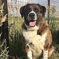 Adopt A Pet :: Thaddeus - Sidney, NE