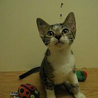 Adopt A Pet :: Nova - Milwaukee, WI