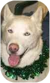 Husky Mix Dog for adoption in Eatontown, New Jersey - Jake