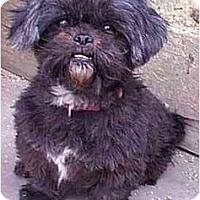 Adopt A Pet :: BITSY - dewey, AZ