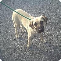 Adopt A Pet :: Larry - Harrisburgh, PA