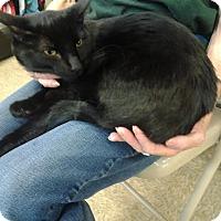 Adopt A Pet :: Phantom - Modesto, CA