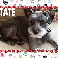 Adopt A Pet :: TATE - Higley, AZ
