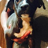 Adopt A Pet :: Cheney - Ocala, FL