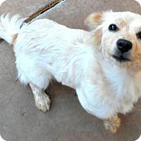 Adopt A Pet :: Baby Calista - Oakley, CA