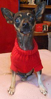 Chihuahua Dog for adoption in Yucaipa, California - Christina