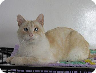 Domestic Shorthair Cat for adoption in Glenwood, Minnesota - Nova