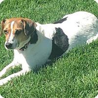 Adopt A Pet :: LADY - Elyria, OH