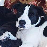 Adopt A Pet :: Gypsy - Toronto, ON