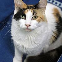 Adopt A Pet :: Lovey - Carencro, LA