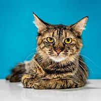 Adopt A Pet :: Jane - Chandler, AZ