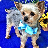 Adopt A Pet :: Dee - Irvine, CA