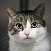 Adopt A Pet :: Maddie - Hastings, MN