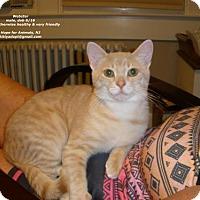 Adopt A Pet :: Webster - Marlboro, NJ