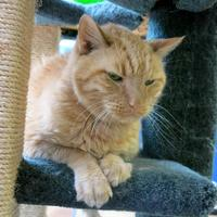 Adopt A Pet :: Buhdy - Northbrook, IL