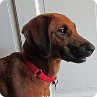 Adopt A Pet :: Little Ann - Baltimore, MD