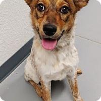 Adopt A Pet :: Delta - Casa Grande, AZ