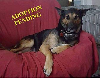 German Shepherd Dog Mix Dog for adoption in Winnipeg, Manitoba - JESSE