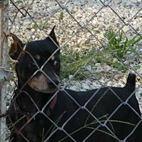 Adopt A Pet :: Nitro - Wyanet, IL