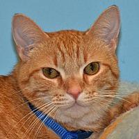 Adopt A Pet :: Max - Cincinnati, OH