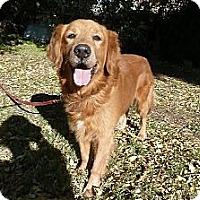 Adopt A Pet :: hudson - Mission Hills, CA